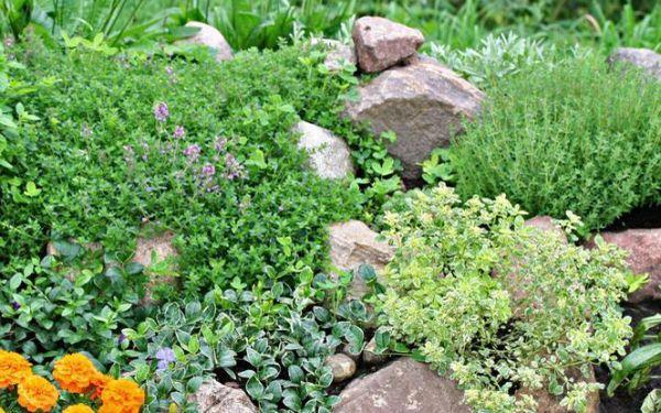 Uprawa ziół w ogrodzie: sadzenie i pielęgnacja