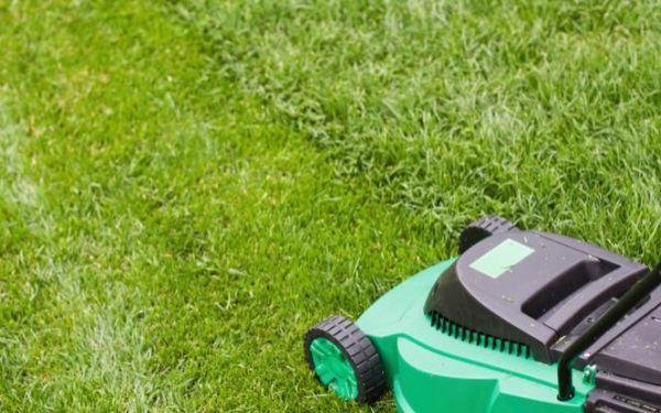 Kosiarki do koszenia trawnika. Jak wybrać kosiarkę do ogrodu?